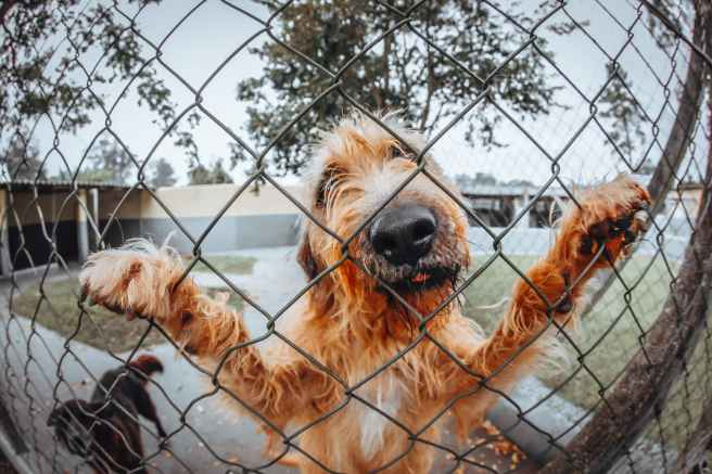 dogs behind fence
